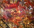 紅葉で高揚する会